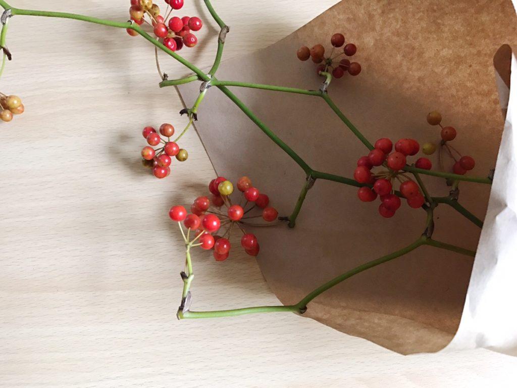 サンキライは、中国・朝鮮半島、また日本にも生息するつる性の落葉低木。昔は生薬として活用されていたそうです。漢字で山帰来と書くのは、山で病にかかった人がこの実を食べて元気に帰ってきたことからこの名がついているよう。  お花屋さんでは秋冬に出回ることが多く、サンキライの赤い実を使ったクリスマスリースは人気があります。
