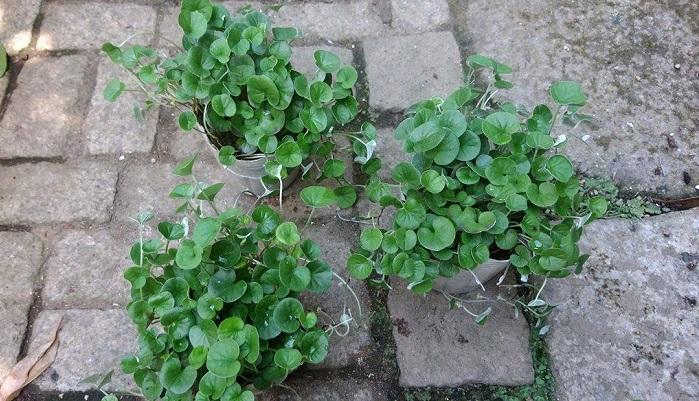 土のままより、植物を植えた方が雑草が生えにくくなります。