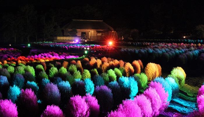 画像提供:国営みちのく杜の湖畔公園   また、コキアのライトアップイベント「コキアカリ」を10/7・8・9に開催。昼間とは雰囲気のまったく違う七色のコキアを見ることができます。ライトアップ時間は17:30~21:00となっています。 9/30(土)から10/9(日)までの土日祝は「ふるさと村の秋まつり」として、東北6県の郷土芸能のステージがあります。9/30(土)は岩手県の鬼剣舞、10/9(日)は青森県の津軽三味線と福島県のフラ&タヒチアンダンス、とそれぞれ見ごたえのあるステージをご用意しています。 期間中には無料入園日があり、9/18(月祝)は65歳以上の方が、10/1(日)と10/8(日)は来園者全員が無料で入園できます(駐車料金は別途必要)。    ▼くわしいイベント情報はこちら!      ▼コキアカリの詳細情報はこちら!    目次に戻る≫