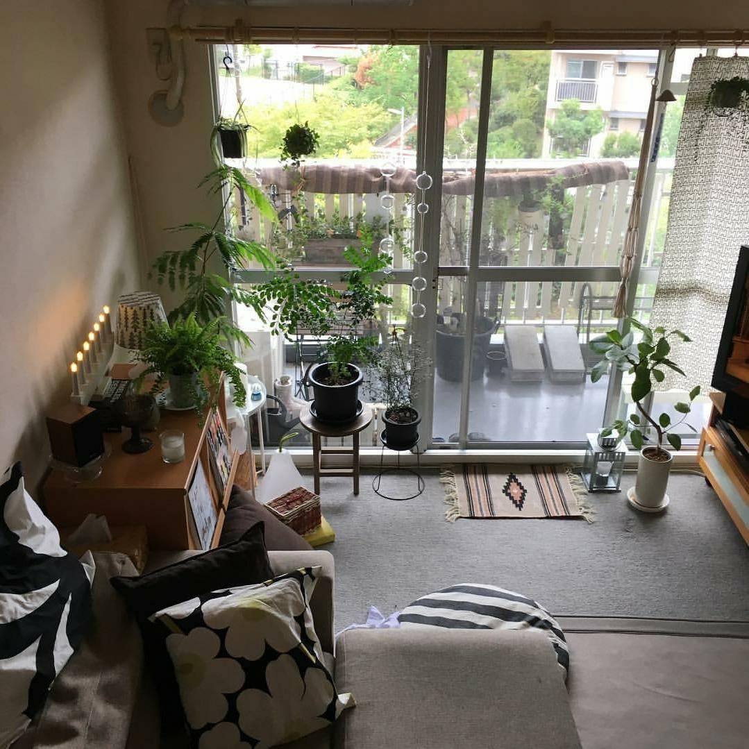 おしゃれなインテリアと観葉植物のある空間は、みんなの憧れです。 @yaiistagram_さん提供