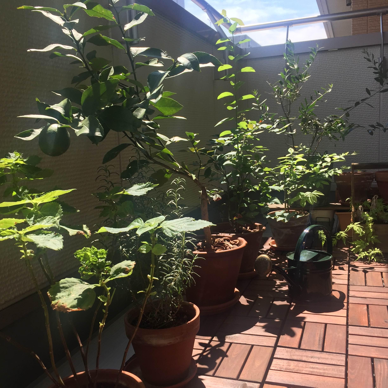 ウッドタイルの上で、のびのびと暮らす植物たちを見ているだけでも癒されるすてきなベランダですね。@miiyy___ さん提供