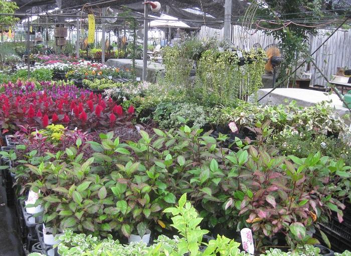 広いハウスの中には、厳選された季節の草花、珍しい多肉植物などが辺り一面に並んでいます。