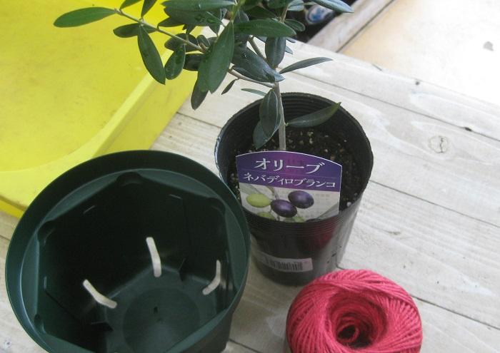 ・オリーブのポット苗 ・植え替え用のスリット鉢 ・麻紐 ・水はけの良い土(オリーブ専用の土以外を使う時は、培養土に赤玉の小粒やパーライトをミックスすると良いそうです。) ・土入れ