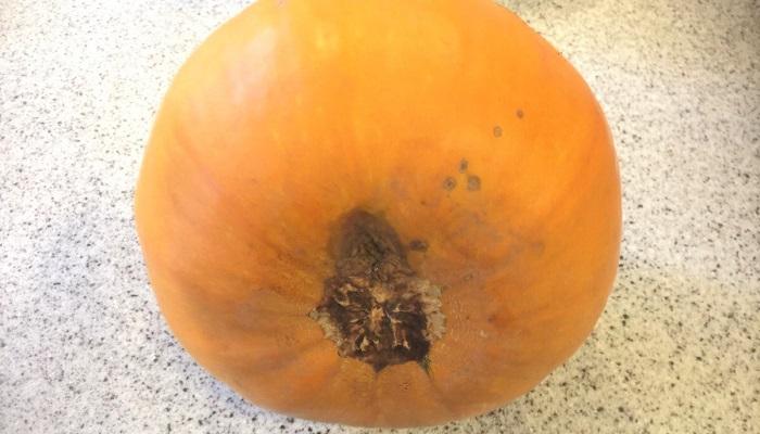 かぼちゃの底面、なんと腐ってしまっています。