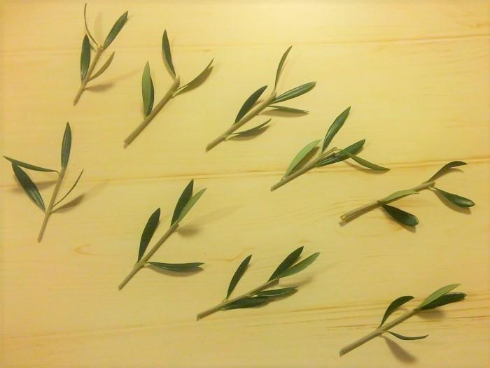 枝を10~15㎝ほどに切り取ります。切り口を斜めにすると、水分を吸収しやすくなります。  下の方の葉を取り、葉を2~3枚残します。