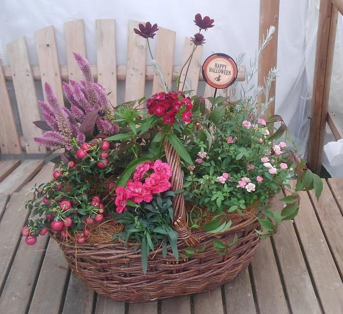 今回は、バスケットを手に秋の収穫を楽しむようなイメージをもとに、手付きのバスケットを器にして寄せ植えを作りました。 今は、実りの秋を感じる実もの植物や、秋色の草花がバリエーション豊富に手に入る季節です。苗のネーミングも面白いものもありますね。  残暑が厳しいと心地良く過ごせる秋の季節が短くなってしまい、気が付くと寒い冬。。。 それは悲しすぎます。大好きな秋のシーズンを思い切り楽しみたいと思うこの頃です。  ぜひ、皆様もこの季節にしか作れない寄せ植えを作って、秋をたっぷりお楽しみくださいね。
