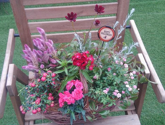 置く場所  屋外の風通しの良い日なたに置きます。  花台や椅子にのせたり、少し高さを出して飾るとさらに見栄えがします。ハロウィンまでの間、ハロウィンピックをさして飾ればハロウィンも盛り上げられますね。  肥料  肥料入りの培養土を使うので、1カ月後から水やりを兼ねて液肥を与えます。  花がらとり  チョコレートコスモス、姫バラは、花びらが自然に落ちます。葉の上に落ちた花びらは見た目も悪く、病害虫の発生も促すのでこまめに取ります。なお、花びらが落ちた後には「種になる部分」が残るので、次の芽が出ている上の部分でカットしましょう。  ナデシコ2種、ケイトウは、花がらが残ります。美しくない状態になった花は、次の芽が出ている上の部分でカットしましょう。  花がらとりをこまめにすると、次の花がどんどん咲きやすくなりますよ。  ハッピーベリーの実も、美しくない状態になったらカットして枝葉に栄養が行くようにしましょう。   切り戻し  育って姿が乱れた場合は、茎を短くし、再び美しく楽しむことができます。切り戻しに合わせて薄めの液肥を施すと、新芽の成長が良くなります。  水やり  土が乾いたら株元からたっぷりお水をあげましょう。