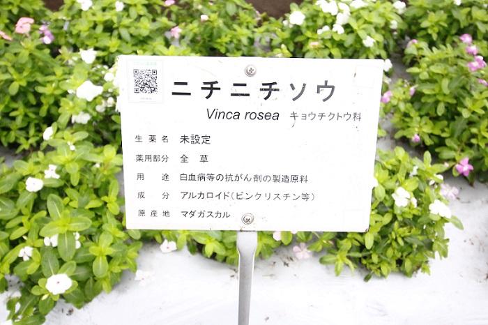 多くの植物園で見られる、植物を種類ごとに紹介するタグ。東京都薬用植物園はタグもほかとちょっとちがいます。植物名のほかに、生薬としての名前や用い方、利用されている部位などが細かく説明されているのです。一つひとつの説明を読むのがとても楽しく、どんどん知識が増えていきそう。一日では回りきれないかもしれませんね。