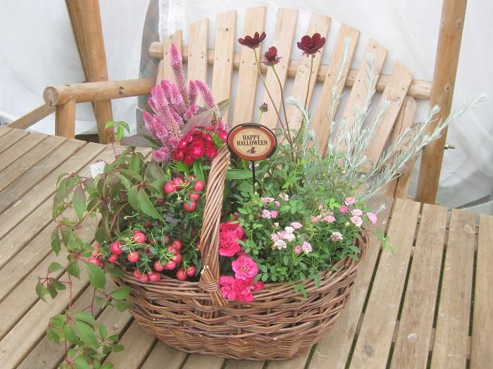 (この写真は、ポット苗をバスケットに入れてあるだけの状態です。)  9cmポット苗8ポット、バスケット、ハロウィンピック  苗を選ぶ時は、背の高いものと低いもの、花や葉の大きさ、形や色や質感の違いを意識して色々と組み合わせて合うものをセレクトしましょう。