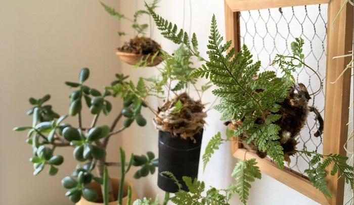 例えば、小さな新芽を出してくれたり、ぐんぐん生長する姿をみると、とても嬉しい気持ちに。観葉植物たちは空間づくりのグリーンだけではなく、いっしょに暮らしすパートナーのような存在です。ぜひお気に入りの形の植物を見つけて、育てる楽しみを味わってみませんか。