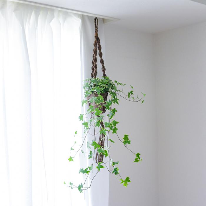 吊るす観葉植物 アイビー へデラ