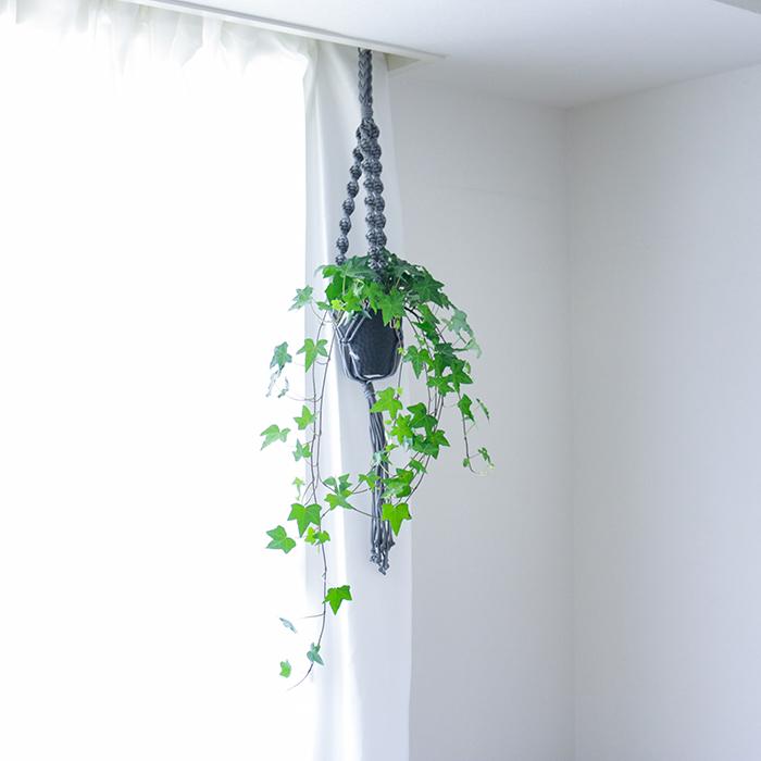 吊るせる観葉植物 アイビー へデラ