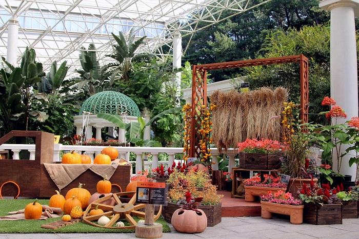 画像提供:フラワーパークかごしま  ハロウィーンを連想させる色とりどりの植物。ハロウィーンのイメージカラーで演出した花壇が登場します。    ▼このイベントについてくわしくみる!