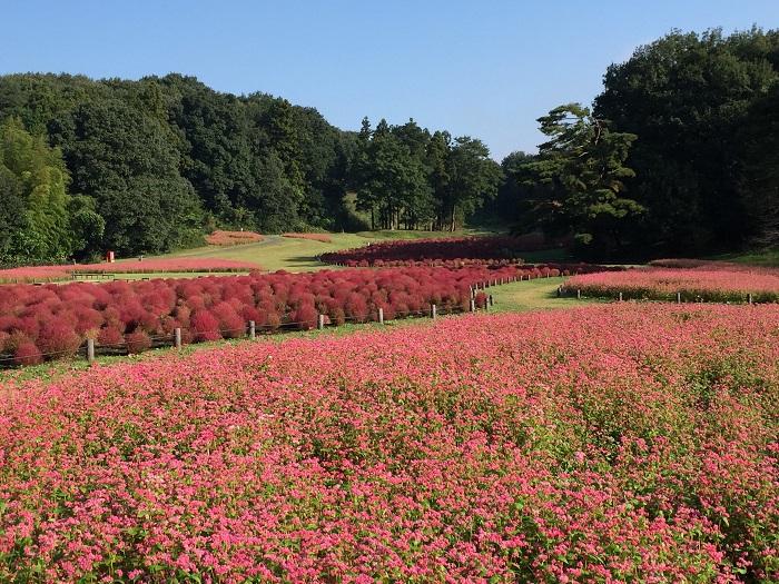 画像提供:国営武蔵丘陵森林公園