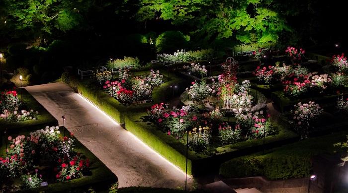 旧古河庭園では、春・秋のバラの見ごろに合わせ「バラフェスティバル」を開催。大正初期に建てられた重厚な洋館と、約100種199株の色とりどりのバラが咲き競う洋風庭園で、バラの美しさを堪能できます。