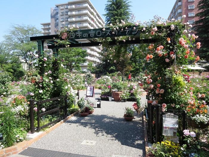 四季の香ローズガーデンでは、バラの見ごろに合わせて「スプリングフェスティバル」「オータムフェスティバル」を開催。バラの香りが漂うなかで楽しめるガーデンコンサートをはじめ、ローズガーデンヨガやチューリップの寄せ植え教室など、花を身近に感じながら楽しめるイベントが開催されます。