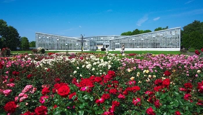 東京でとくに有名なバラの名所といえば、神代植物公園があげられるのではないでしょうか。大温室を前にしたバラ園は広大で、約400品種・5,200株のバラが栽培されているそうです。これは東京でもトップレベルの規模。春のバラの時期にはイベントが開催され、多くの人でにぎわいます。