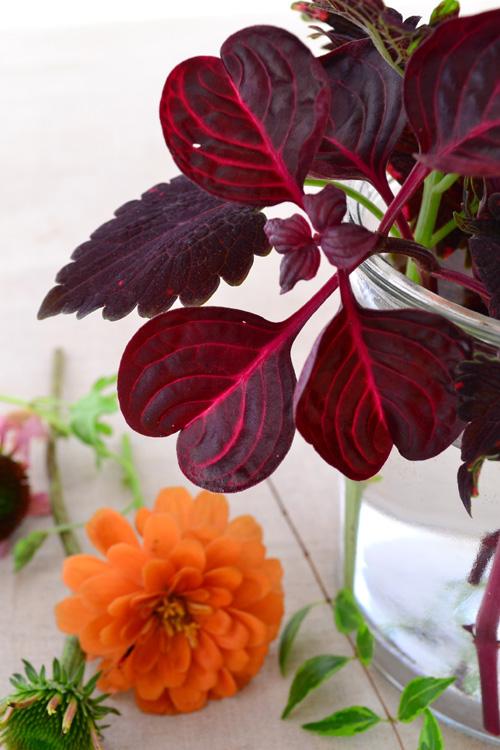 ハートの葉がかわいいイレシネ。
