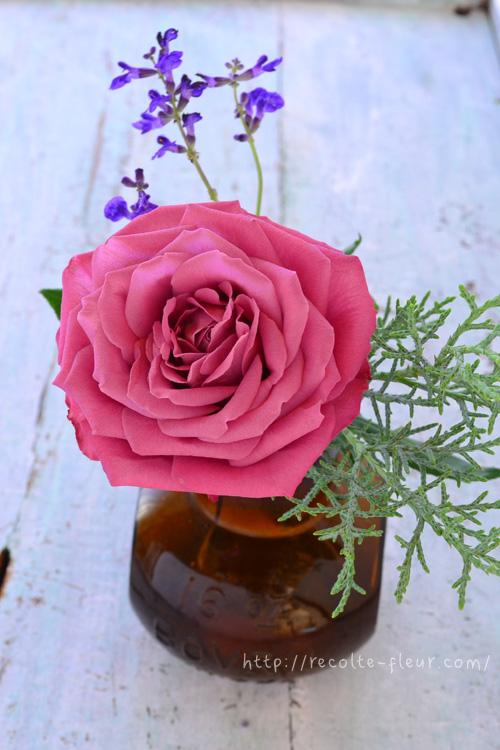 気温が低い季節はバラをゆっくり楽しめます!