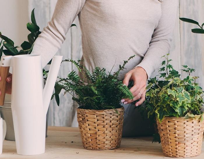 鉢カバーや植木鉢を揃えると統一感が出て、すてきなお部屋に。同じものでなくてもテイストを揃えてみたり、このコーナーは揃えるなど飾り方にメリハリをつけると、室内に一体感ができます。