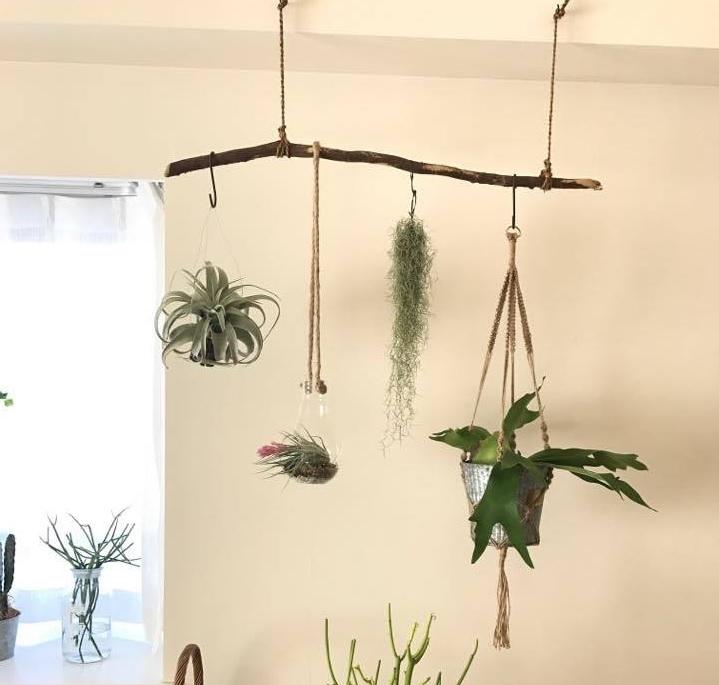 すきな観葉植物をぶら下げて飾る。ぶら下げる場合は落ちないように注意しましょう。また、重いものをたくさんぶら下げないようにしましょう。飾るときに植物同士がくっつかないように空間を開けて飾りましょう。