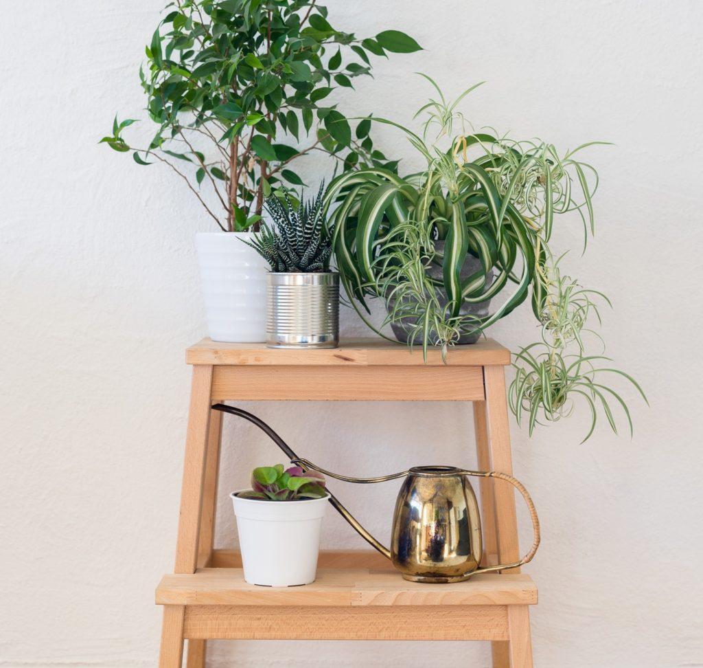 観葉植物同士が重ならない程度に、段差をつけることで立体感を演出。グリーンひとつひとつが引き立ちます。