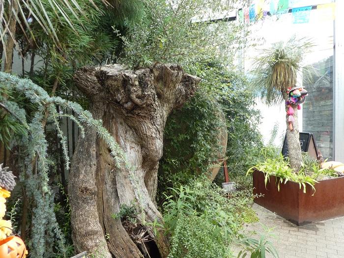 樹齢500年を生きたオリーブの木だそうです。奥に置かれているのは、200年前のペルシャ人が実際に使っていた、オリーブオイルを入れる大壺。並んだ二つを見ると、時空を飛び越えるような感覚を受けます。