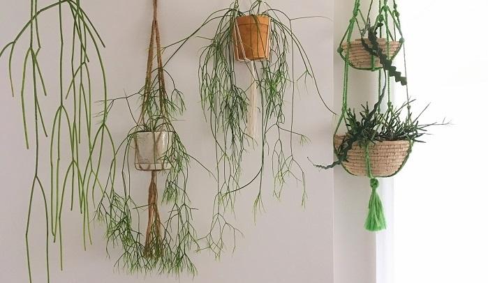 いかがでしたか? 観葉植物の飾り方はまだまだ沢山。自分好みのインテリアとあわせて植物のあるすてきなお部屋づくりをしてみてくださいね。