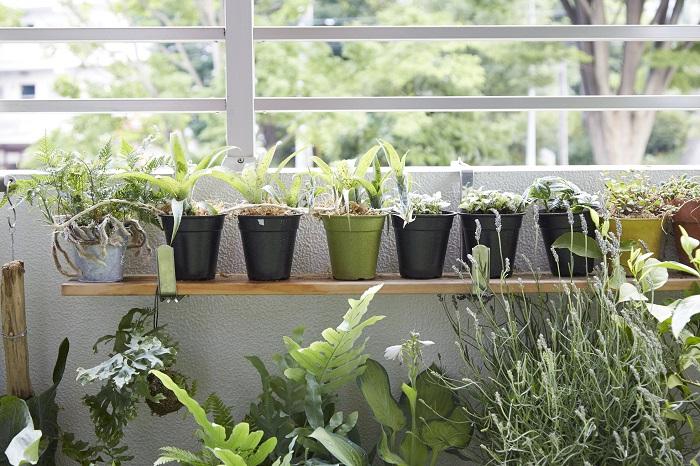 棚上にはトキノシブ、株分けしたネオレゲリア、下にはギボウシなどの耐陰性のある植物が置かれています。