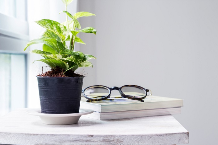 ◆玄関は家の顔!綺麗に保つことで日常の満足度をあげることができる  ◆玄関に窓がない場合は耐陰性の植物を選ぶこと  ◆観葉植物は週に何度かカーテン越しの光で日光浴をしよう