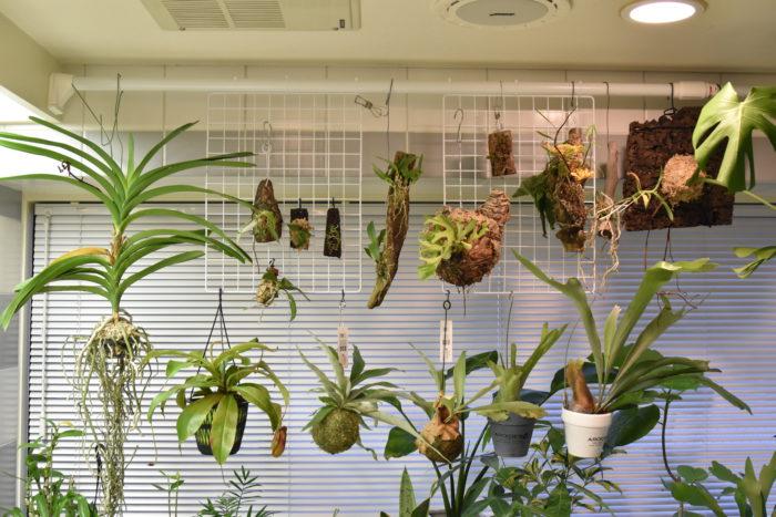 大きさにもよりますが、結構な数の植物を掛けられそうですね。