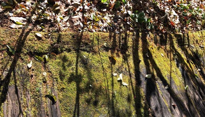 秋に初めてバラクラ イングリッシュ ガーデンを訪れました。