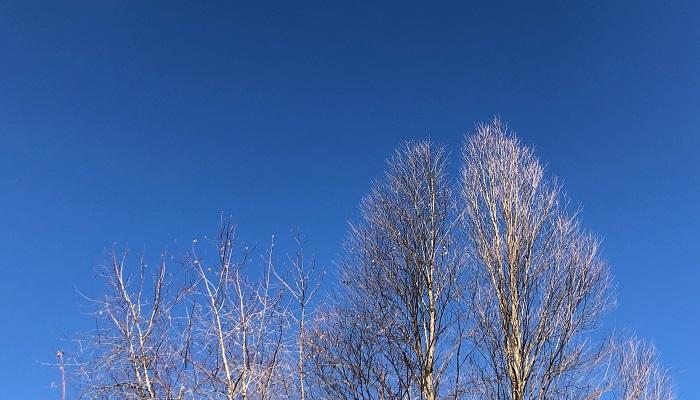 大きな木はすっかり葉をおとし、抜けるような冬の青空に映えていました。