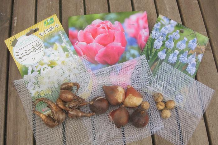 写真左から、ミニミニ水仙、チューリップ、ムスカリの球根です。  水仙、チューリップ、ムスカリは、育てやすい秋植え球根の定番ですね。その中でも今回はちょっぴり珍しい品種を選んでみました。球根が春に芽吹いて満開に咲くのが楽しみです。  ミニミニ水仙 セイルボート ヒガンバナ科 耐寒性球根 開花期:3~4月 草丈25~35㎝  日なたから半日陰、水はけのよい用土を好みます。とても丈夫で栽培が簡単! また、草丈が低いので寄せ植えにピッタリです。