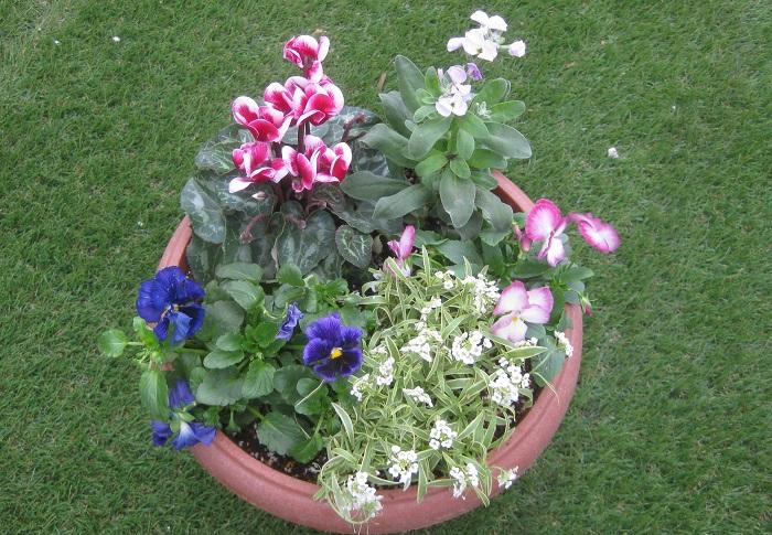 今月のテーマは「秋冬も楽しみながら春の到来を待つ」  秋冬には、寄せ植えした花の元気に咲く姿を楽しみ、春に球根たちがかわいい芽を出して色とりどりの花を咲かせる姿をイメージして作りましょう。寒さを乗り越えた球根植物が春の訪れと、植物のパワーを教えてくれます。