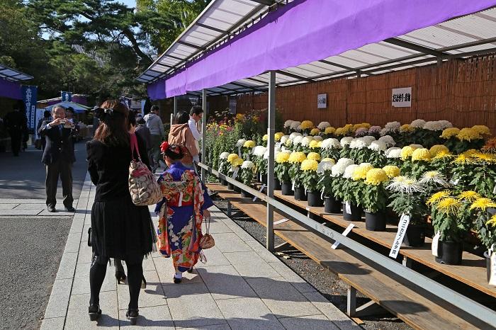 画像提供:高幡不動尊金剛寺  今年で47回目となる高幡不動尊菊まつり。多摩地域最大規模の菊まつりです。近隣11市の菊愛好会の団体から出品される大菊、懸崖(けんがい)、盆栽、切花などの作品はどれも目を見張る出来映え。約1200鉢あまりの菊花が重厚な高幡不動尊のおもむきとともに楽しめます。  10月5日(日)、13日(月)には内閣総理大臣賞を始めとする35の賞が選ばれます。  10月31日(火)には好評の「菊の育て方講習会」も行われ、菊の栽培方法についての相談も受けています(11:00~12:00、参加費1000円、10名限定)。  11月13日(月)には出品花の福助の販売(13:00~16:00)、11月7日(火)と14日(火)には出品花の切花の販売(9:30~16:00)が行われます。  ぜひ秋の一日を菊とお過ごしください。