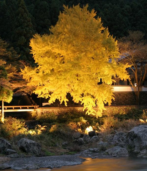 画像提供:青梅市観光協会  日本名水百選にも指定されている清流の両岸を、いちょうやもみじが色鮮やかに彩り、息をのむほどの美しさです。    ▼イベント情報をくわしくみる!