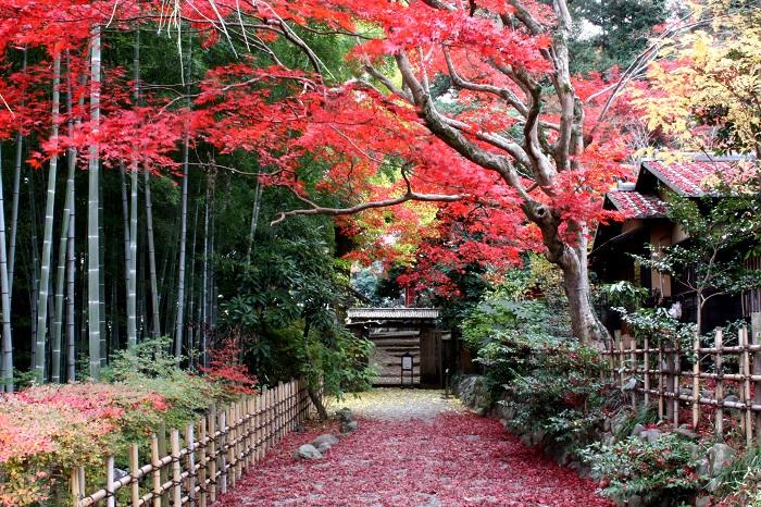 画像提供:京王百草園  京王百草園(もぐさえん)は豊かな自然が残る多摩丘陵の一角にある小さな和庭園です。美しく色付くモミジやイチョウの秋景色をご観賞下さい。 高台に位置するため、天気の良い日には遊歩道の見晴台からスカイツリーや富士山も眺められます。 紅葉まつり期間中の土日祝日には和楽器等の演奏もお楽しみください。 11/23~11/26の夕刻には、閉園時間を延長して紅葉ライトアップを行います。    ▼イベント情報をくわしくみる!