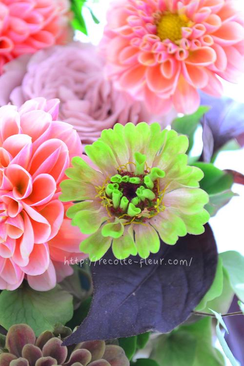 複色とは、ひとくちで赤、ピンクとは言えないひとつのお花の中に、複数の色が含まれている色を表現するときに使われている花業界独特の色の名前です。最近新しく出てくる花は、複色のものがとても多い傾向にあります。単色の花も素敵ですが、微妙な色合いの複色カラーは、隣にあわせる花色によって、まったく見え方が違ったり、色合わせをするのが楽しくなる花色です。