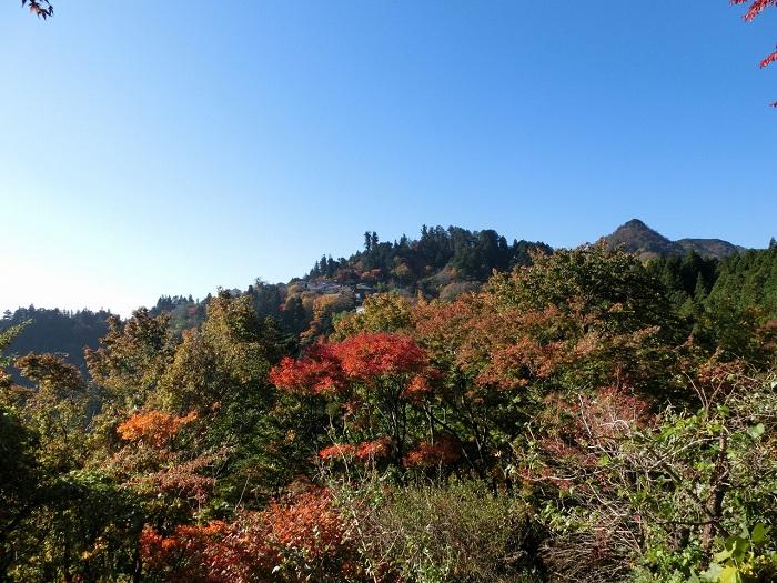 画像提供:青梅市観光協会  標高929mの御岳山では、都心より一足早く秋の気配を感じることができます。山頂近くまでケーブルカーを使って気軽に登ることができます。平地に比べて気温が低いので紅葉もひときわ美しく、イベントも盛り沢山です。    ▼イベント情報をくわしくみる!