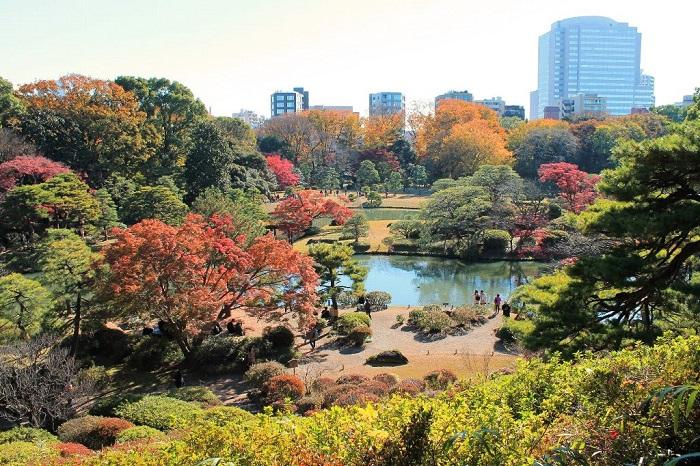 画像提供:六義園  都内有数の紅葉の名所である六義園(りくぎえん)で、今年で17回目を迎える秋のライトアップを行います。期間中は21:00まで開園時間を延長して、秋の夜に朱色や黄金色に色づく木々が浮かび上がり、水面にまばゆく映し出される様子を楽しむことができます。 ライトアップ期間中は毎日、庭園ガイドが11:00と14:00からあり、無料で参加できます。またイベント期間中限定の売店では、軽食や飲み物、六義園オリジナルのお土産の販売もあります。吹上茶屋と、このイベント期だけ抹茶茶屋として営業する心泉亭では、庭園を眺めながら抹茶と上生菓子が楽しめます。 日常とは異なる幻想的な姿を見せる六義園で、落ち着いた秋の佇まいと艶やかな紅葉をお楽しみください。