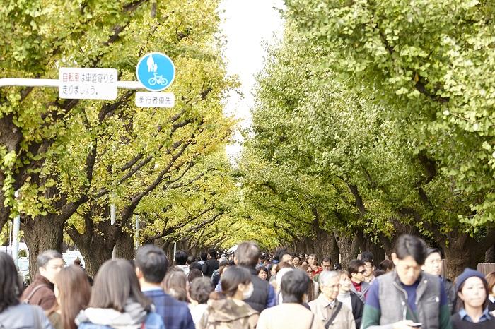 画像提供:いちょう祭り実行委員会  明治神宮外苑のシンボルともいえる聖徳記念絵画館といちょう並木。青山通りから絵画館に向かって四列に木々が連なるその景観は東京を代表する風景のひとつとなっています。四季折々に美しい姿を見せる並木は11月中旬から12月初旬の黄葉がもっとも美しく、毎年木々の色づきとともに多くの方が散策に訪れます。  いちょう並木の一番の見ごろに開催される本「いちょう祭り」では選りすぐりのグルメや物産、イベントで来場者をお迎えし、都心における秋の風物詩として定着。近年は来場者数約180万人を超えるにぎわいをみせています。