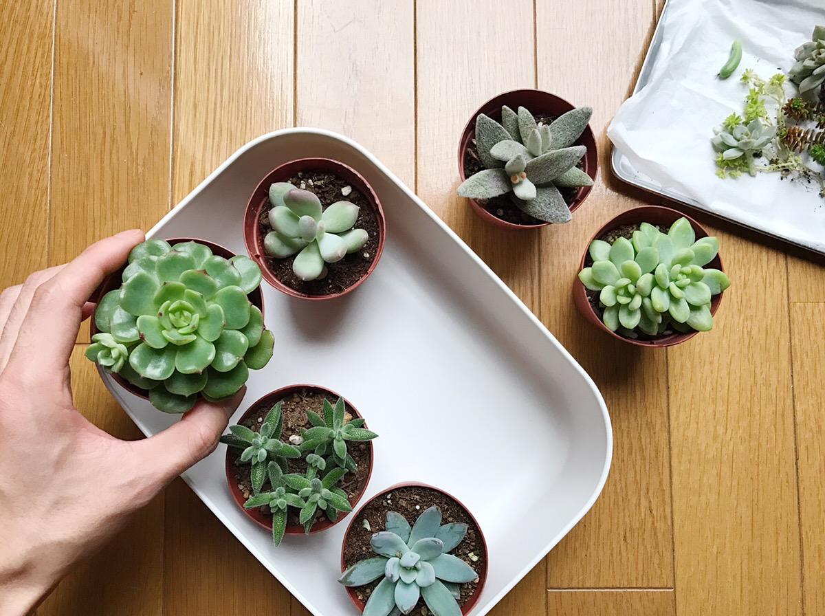 小さいサイズの鉢を入れると自分だけのコレクションのようで、すてきな雰囲気に。この通り、2号鉢の多肉植物が6鉢入ります。上から見ても、おしゃれ。