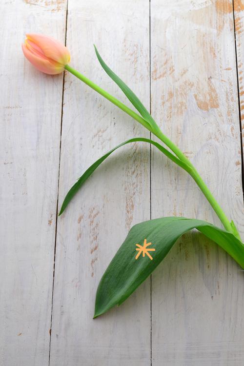 生けるときに花瓶に浸かる葉っぱ(*)は取り去ってから生けましょう。