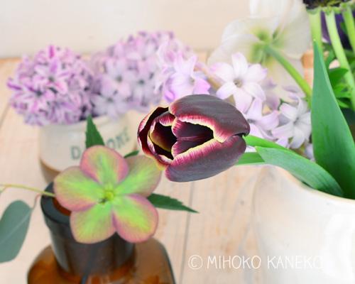 ヒヤシンスやアネモネ、ラナンキュラス、クリスマスローズ・・・など、同じ季節の春の花と一緒に生けてもかわいいですね!