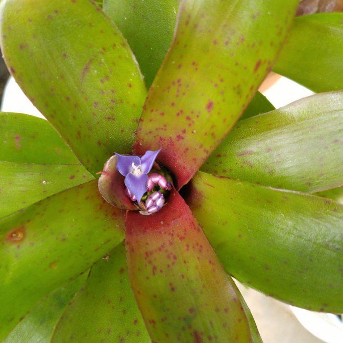 順調に育つとこんな綺麗な花を咲かせてくれますよ。