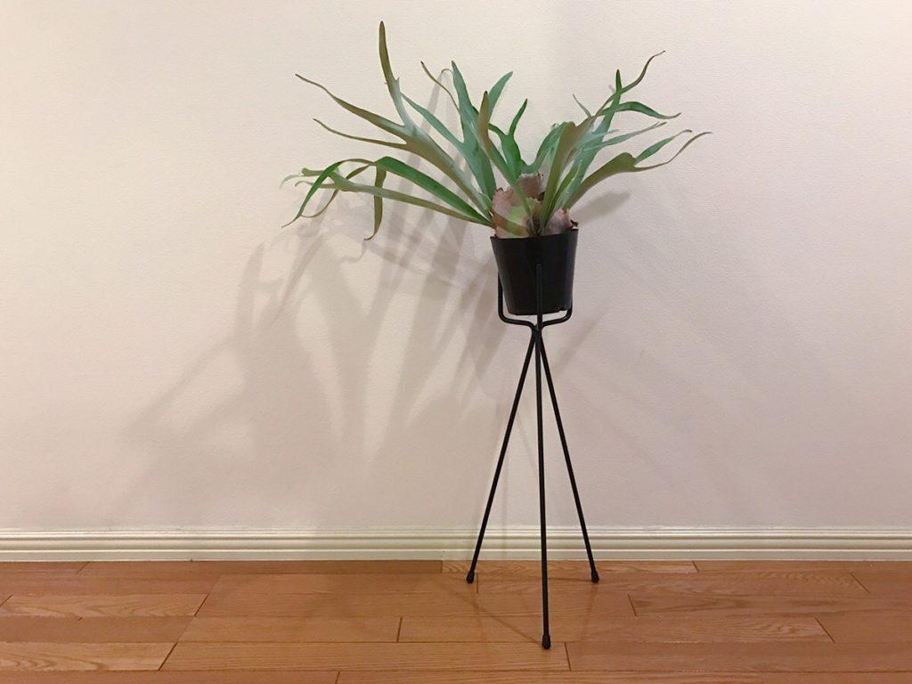植物をおしゃれに飾れるスタンド。三本足のものからスツールのようなものまで様々なプランツスタンドをお店で見かけます。自分の部屋やおうちの雰囲気に合わせてプランツスタンドを選ぶのも楽しいですよね。植物に足が生えたような、また植物がイスに座ってみえるような姿がとてもフォトジェニック。より植物の魅力を引き立たてくれるアイテムです。