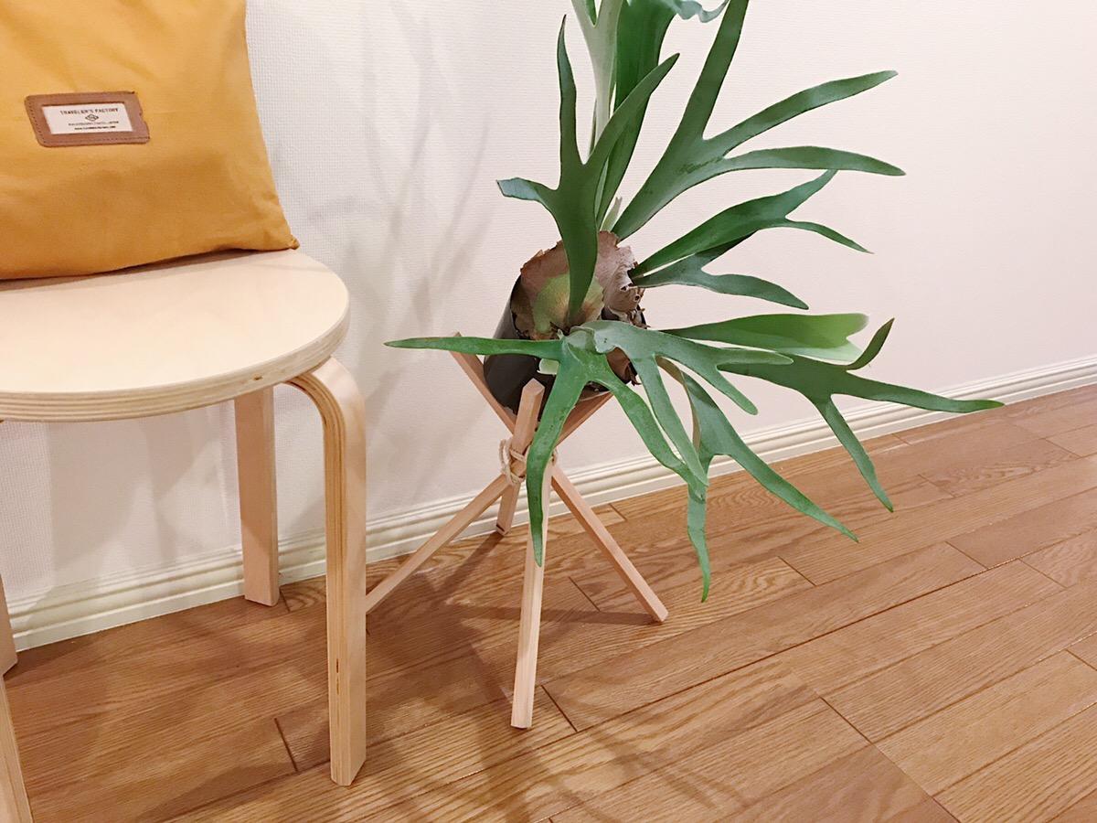 少し傾けて飾れるのがこのプランツスタンドのいいところ。植物の種類によってはお部屋のいいアクセントになりそう。