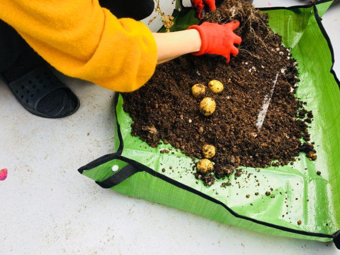 シートの上で収穫したり、作物を抜き取るのに充分な大きさです。