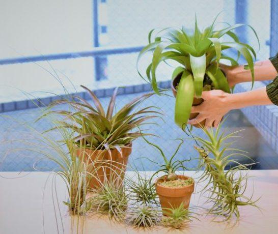 エアプランツは窓際などなるべく明るい場所に置くと良いでしょう。  エアプランツは耐陰性があるため、室内でも育てられますが、元々日光が大好きな植物です。  1日中日光が当たっている必要はありませんが、最低でも午前中いっぱいは日が当たっていると良いでしょう。  暖かい昼間だけ外に出し、夕方の冷え込んできた頃に室内に入れるのもおすすめです。